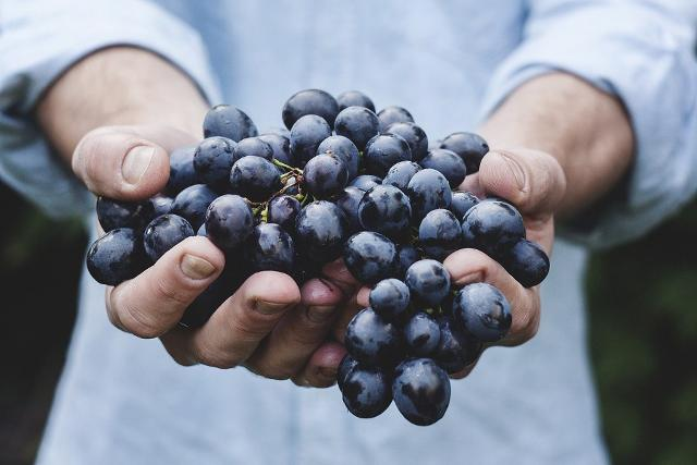Il Frappato è una delle varietà autoctone più importanti della Sicilia