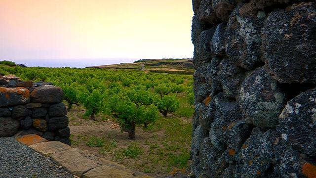 Le viti ad alberello di Pantelleria, Patrimonio Immateriale dell'Unesco