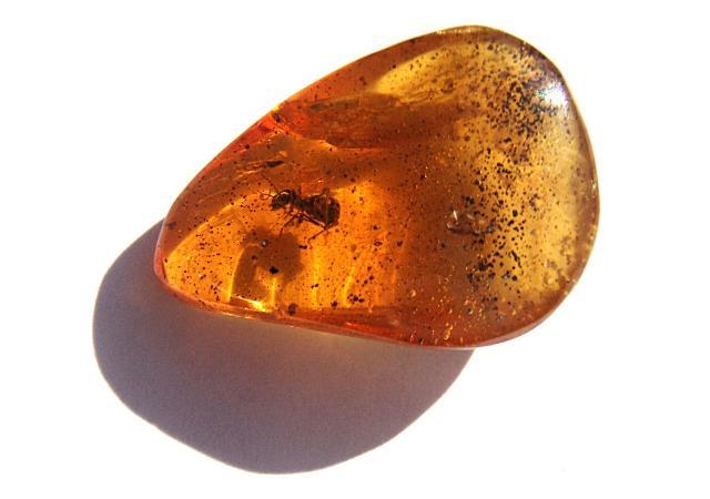 Una formica intrappolata all'interno di una goccia d'ambra