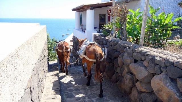 Asini ad Alicudi, il mezzo di trasporto prediletto sull'Isola