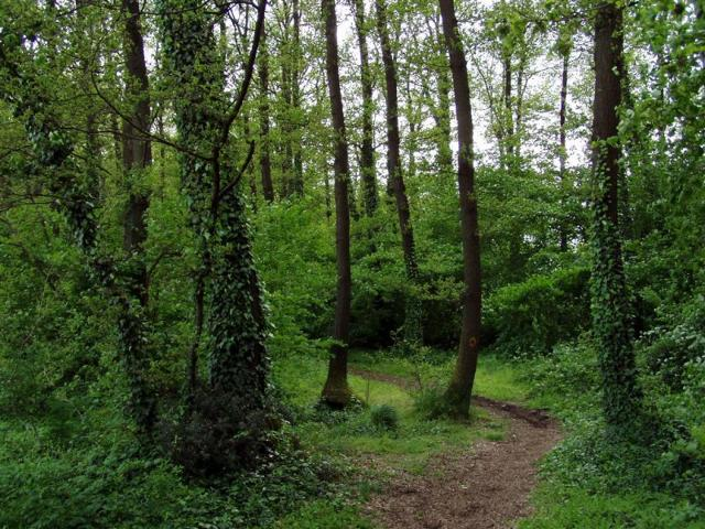 Un sentiero nel fitto del bosco del Parco forestale Calaforno