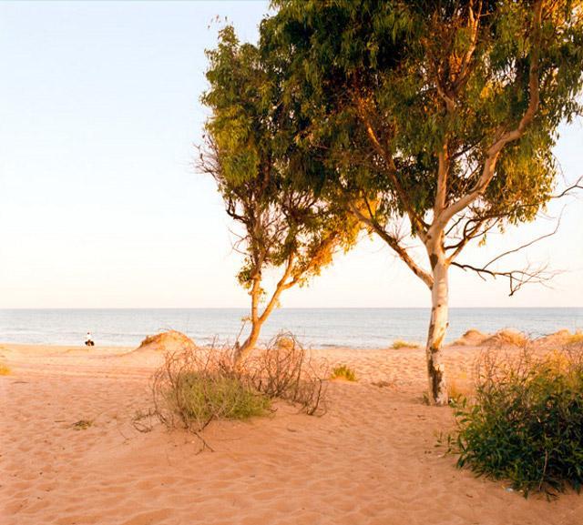 Tamerici sulle dune della Riserva del fiume Belìce