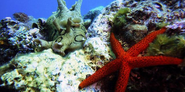 Una Lepre di mare con gli anelli accanto ad una Stella marina