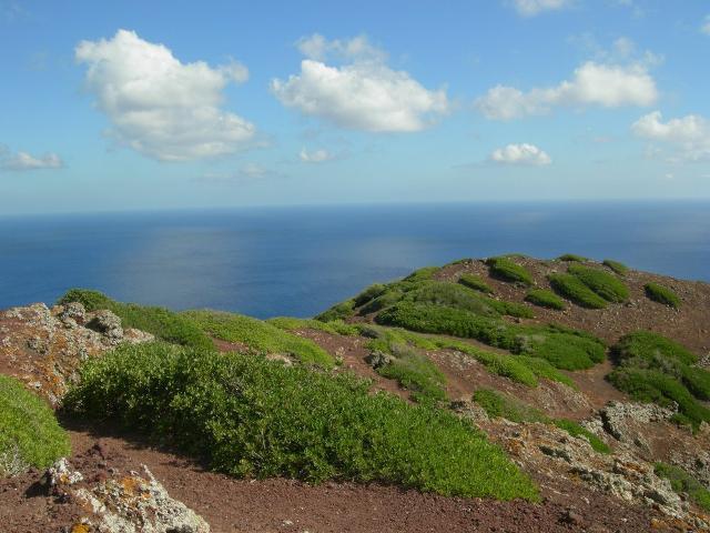 La tipica vegetazione mediterranea di un altipiano di Linosa