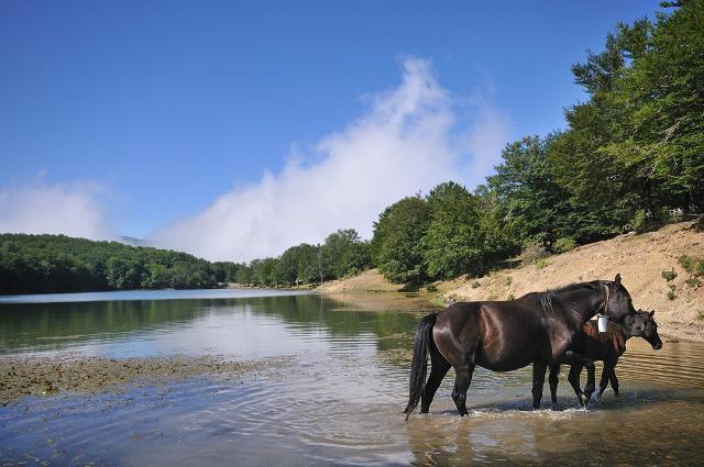 Cavalli sanfratellani allo stato brado, si abbeverano in uno dei tanti laghi che si trovano nel Parco dei Nebrodi