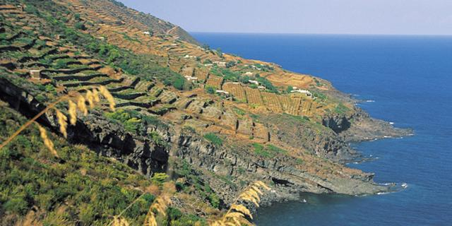 pantelleria-dove-nasce-il-nettare-degli-dei