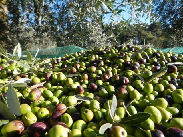 Quella di quest'anno, in Sicilia, non sarà un'annata ricca ma qualitativamente sarà ottima...