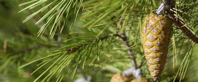 la-riserva-naturale-pino-d-aleppo
