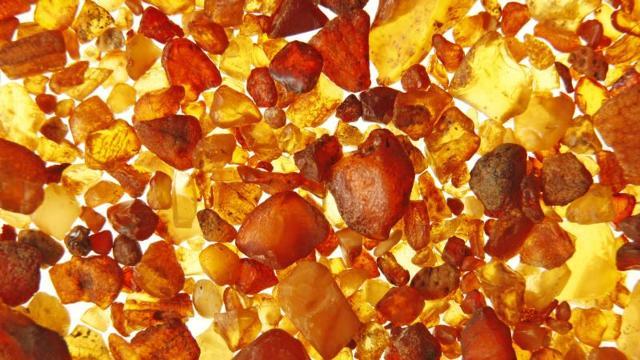 L'ambra è una resina fossilizzata proveniente dalla secrezione di alberi ad alto fusto, simili alle conifere...