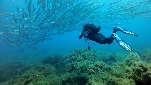 Un sub immerso nelle acque di Ustica