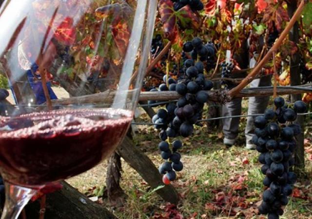 L'81% del vino prodotto in Sicilia è vino di alta qualità: Igp il 53%, Dop il restante 28%...