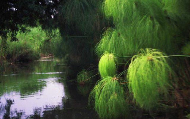 Ciane, il fiume dei papiri