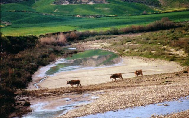 Nella Riserva Naturale Monte Capodarso e Valle dell'Imera meridionale