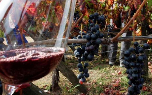 Nel 2019 si sono prodotte 95 milioni bottiglie di Vino Doc Sicilia