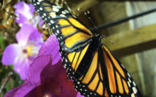 Pronti per la seconda ''Notte delle Farfalle'' a Modica
