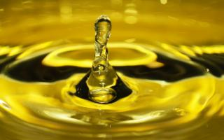 L'Olio di oliva ''Sicilia'' IGP