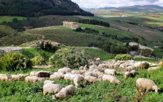 Il Parco Archeologico di Segesta