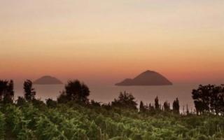 La viticoltura bio in Italia si è triplicata in sei anni