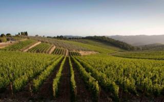 I numeri del vino siciliano in vista di Sicilia en Primeur...
