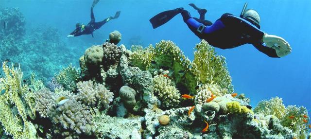 I meravigliosi fondali di Favignana, paradiso per i sub e per gli amanti dello snorkeling
