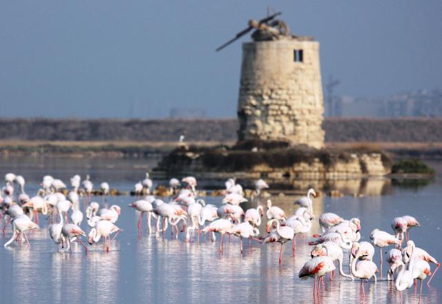 I fenicotteri rosa della Riserva delle Saline di Trapani