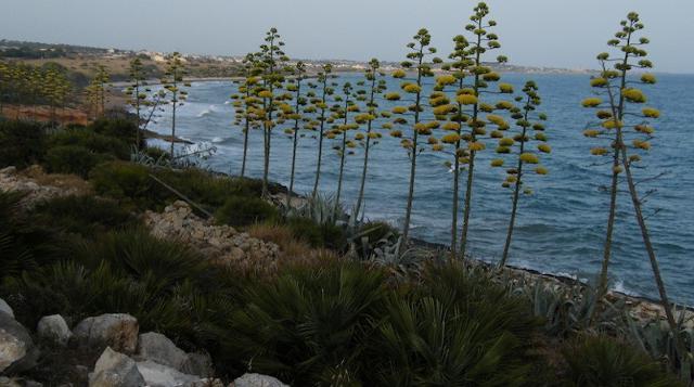 La spiaggia di Costa di Carro - Sampieri (RG)