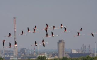 L'Isola dei fenicotteri rosa