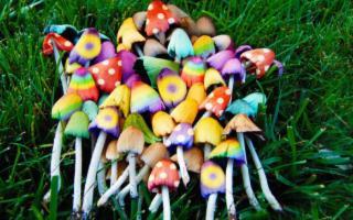 ''Fateci studiare Lsd e funghi magici''