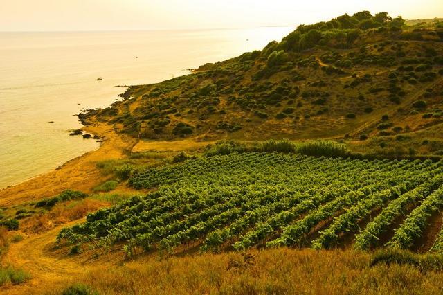 Menfi, tra vigne e mare