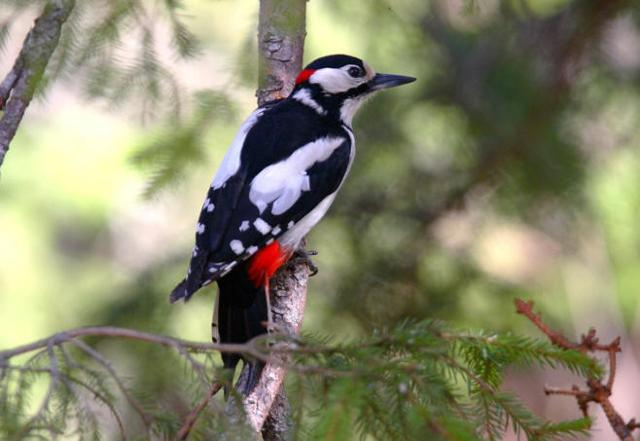 La riserva naturale bosco di favara e bosco granza guida - Primavera uccelli primavera colorazione pagine ...