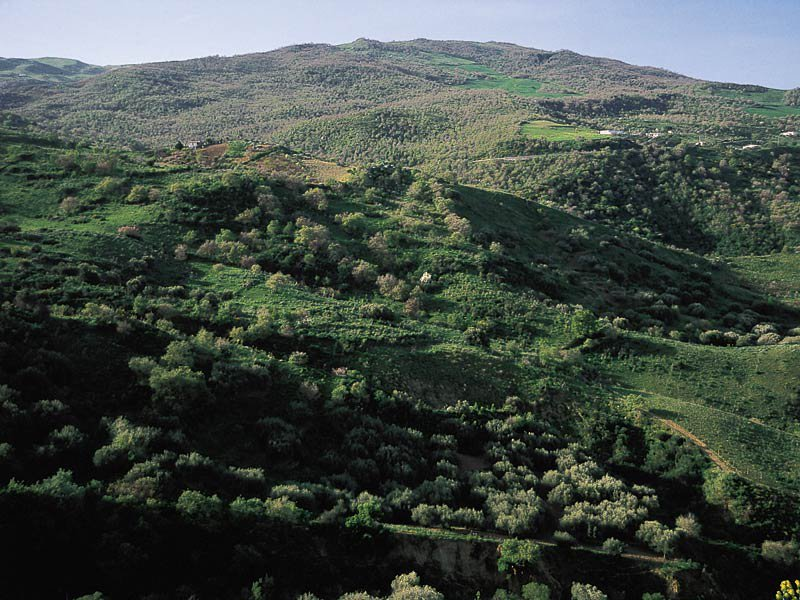 R.N.O. Bosco di Favara e Bosco Granza