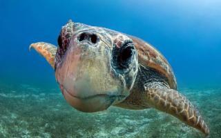 Le tartarughe marine tornano a nidificare in Sicilia