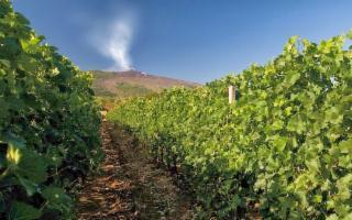 Il vino cullato dal vulcano