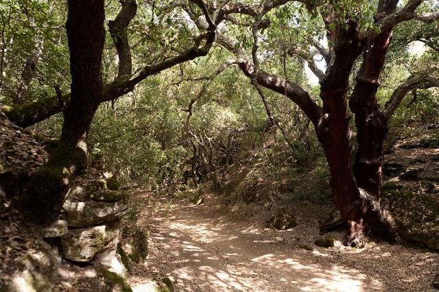 Sentiero dentro il Bosco di Santo Pietro