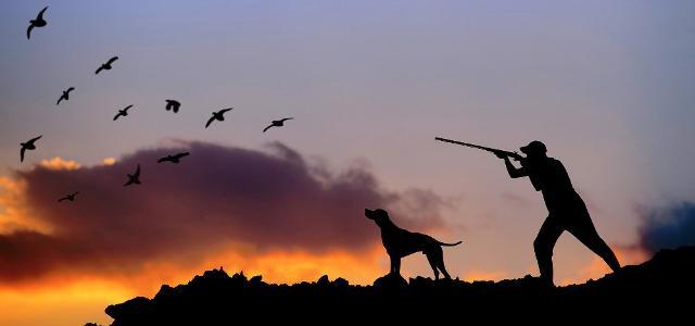 I cacciatori siciliani potranno cacciare fino al 10 febbraio 2019, 26 specie, per cinque giorni a settimana e sono autorizzati ad abbattere fino a 15 animali al giorno ed entrare anche nei terreni privati