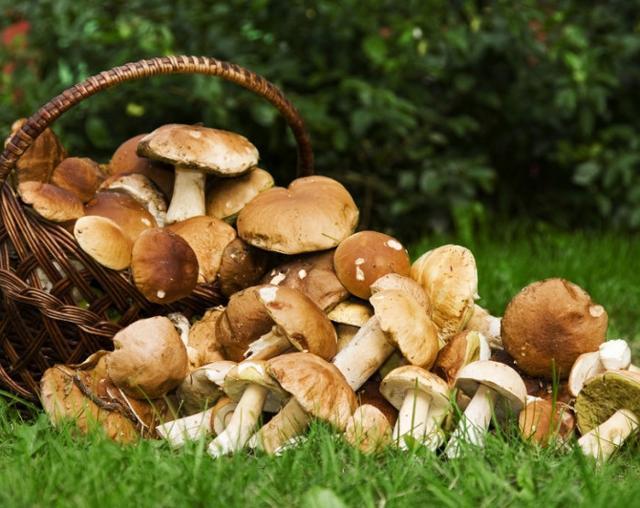 È tempo di funghi