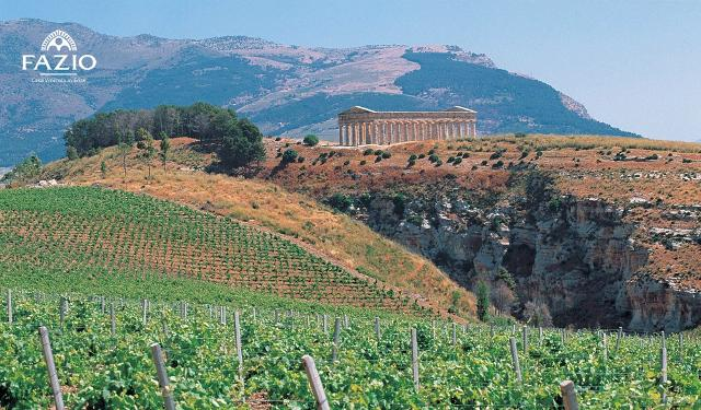 Il tempio di Segesta fa da sfondo ai vigneti Fazio