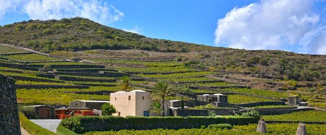 Contrada Khamma, cantina Donnafugata a Pantelleria - ph Fabio Gambina