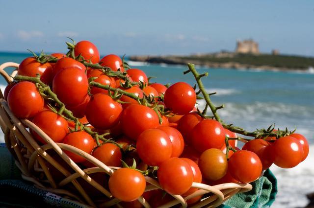 Il Consorzio Igp di Pachino apre le braccia agli agricoltori