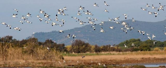Uccelli in volo nell'Oasi del Simeto