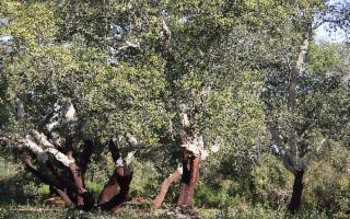 La Riserva Naturale Orientata Bosco di Santo Pietro