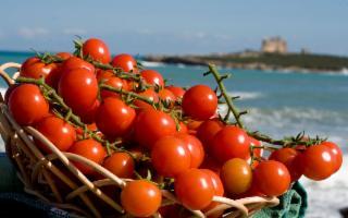 Il Pomodorino Pachino Igp vale 5,6 milioni di euro