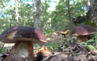I Funghi di Sicilia