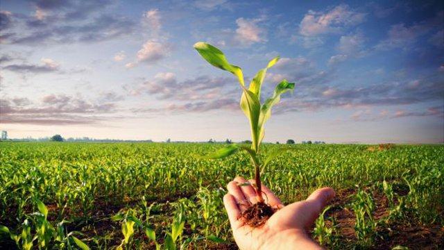 Come è andata l'annata agricola 2016