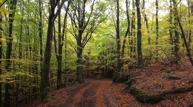 Un sentiero dentro il bosco di Maletto