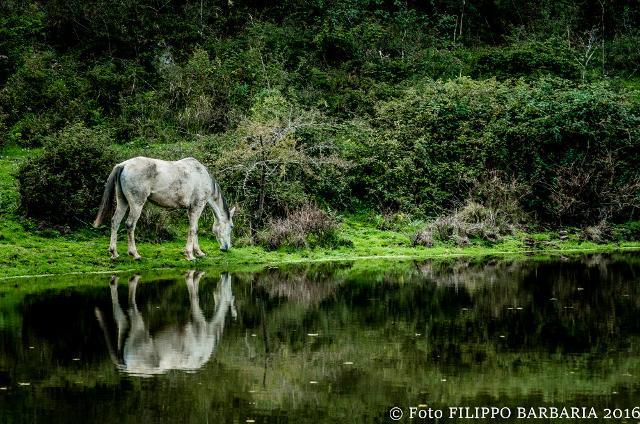 Un cavallo si abbevera nel Gorgo del Drago - ph Filippo Barbaria