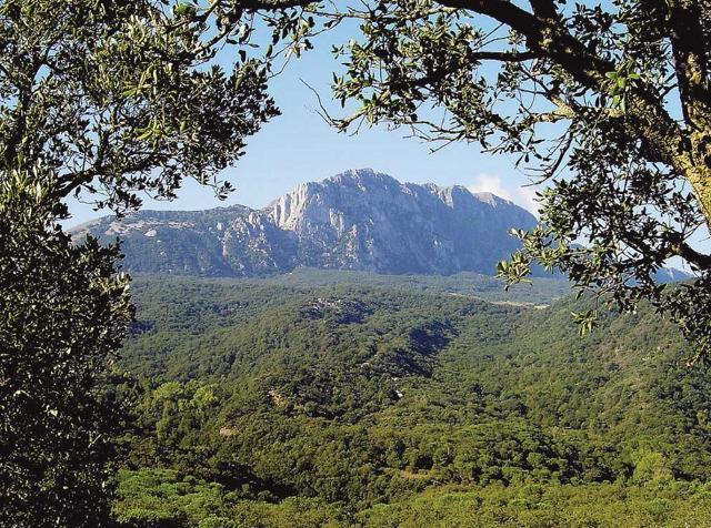 Il bosco di Ficuzza e l'imponente mole di Rocca Busambra