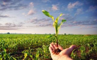 Sbloccati 320 mln per i produttori ''Bio'' siciliani