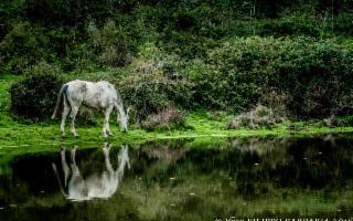 Escursione al Gorgo del Drago e Gorgo Lungo