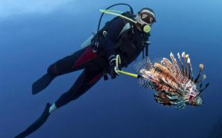 Attenti ai pesci palla e a quelli scorpione!